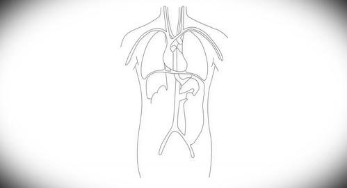 4K Human Organs 03 Stock Video Footage