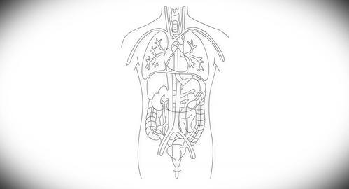 4K Human Organs 03 Animation