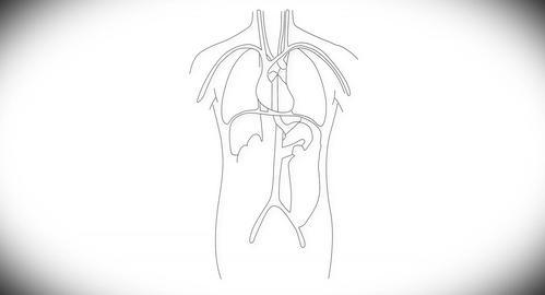 4K Human Organs 07 Stock Video Footage