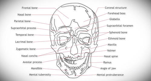 4K Human Skull 01 front Animation
