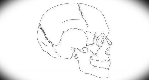 4K Human Skull 07 side Stock Video Footage