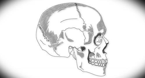 4K Human Skull 07 side Animation