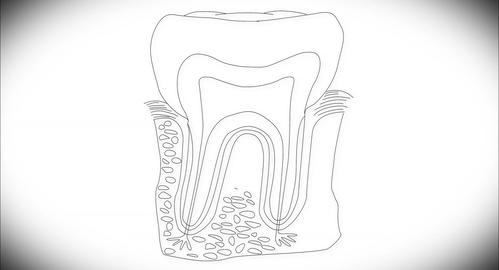 4K Human Tooth Structure 03 Stock Video Footage