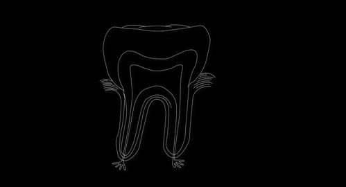 4K Human Tooth Structure 05 Stock Video Footage