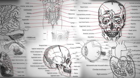 Human Body Parts Stock Video Footage