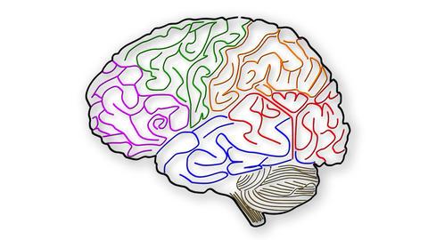 Human Brain 01 Animation
