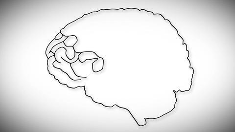 Human Brain 02 Stock Video Footage