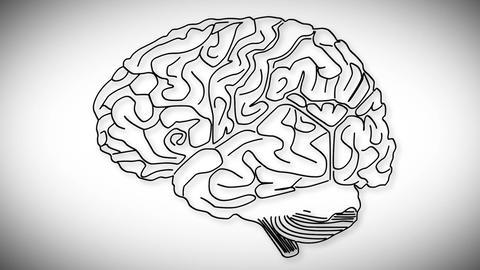 Human Brain 02 Animation