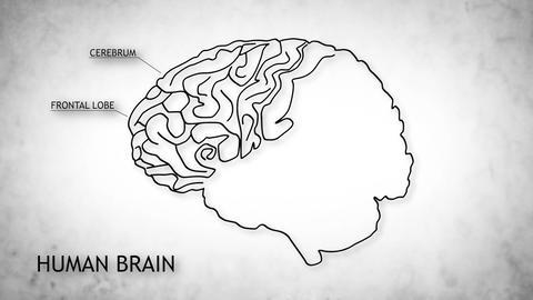Human Brain 06 Stock Video Footage