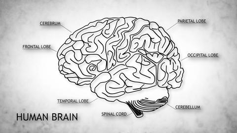 Human Brain 06 Animation