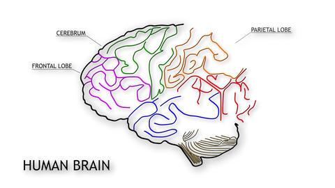 Human Brain 10 Stock Video Footage