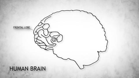 Human Brain 12 Stock Video Footage