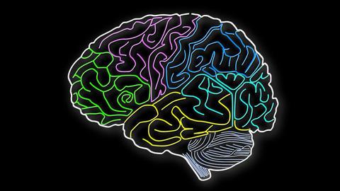 Human Brain 14 Animation