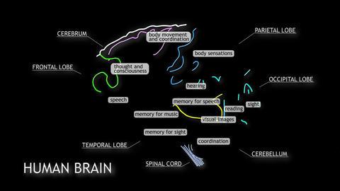 Human Brain 16 Stock Video Footage