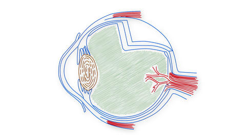 Human Eye 04 Animation
