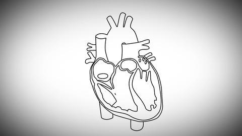 Human Heart 03 Stock Video Footage