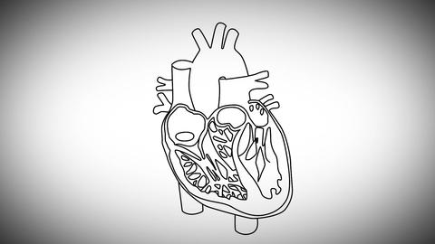 Human Heart 03 Animation