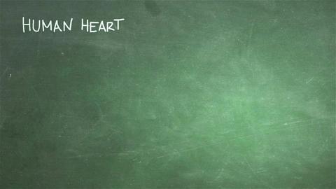 Human Heart 05 Stock Video Footage