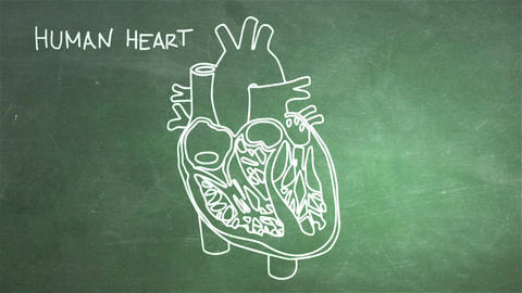 Human Heart 05 Animation