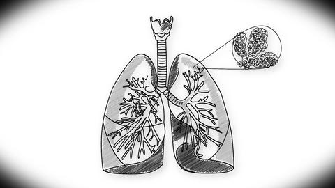 Human Lung 03 Animation