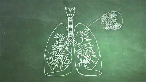 Human Lung 05 Animation
