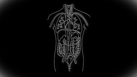 Human Organs 04 Animation