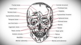 Human Skull 01 Front stock footage