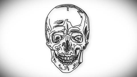 Human Skull 03 front Animation