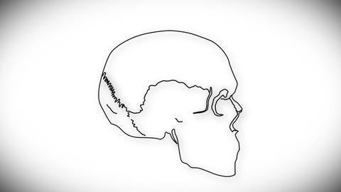 Human Skull 05 side Stock Video Footage