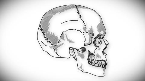 Human Skull 07 side Stock Video Footage