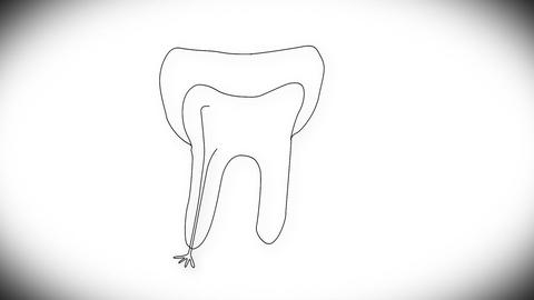 Human Tooth Structure 01 Stock Video Footage
