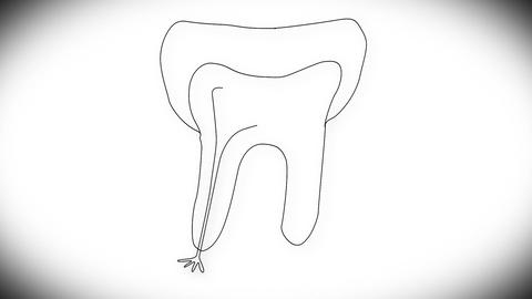 Human Tooth Structure 03 Stock Video Footage