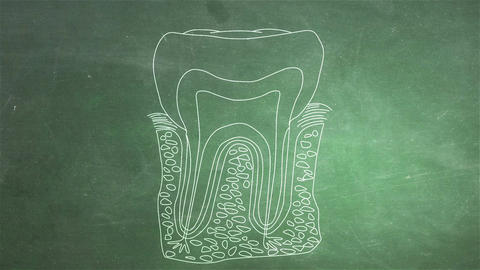 Human Tooth Structure 07 Stock Video Footage