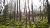 Weeds by the river,dense cedar dawn-redwood forest,woods,Jungle,shrubs,wetlands Footage