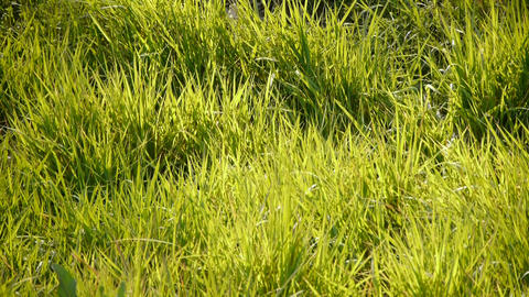 Lush grass in the sun Stock Video Footage