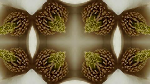 Beautiful magnolia bloom Kaleidoscope.pattern,four... Stock Video Footage