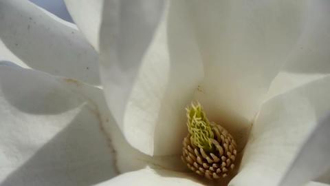 Beautiful magnolia bloom white Kaleidoscope Stock Video Footage