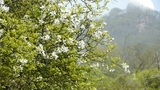 Flowers sway in wind.Bees flying in flowers & mountain hill Footage