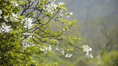 Flowers sway in wind Stock Video Footage