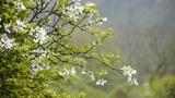 Flowers sway in wind Footage