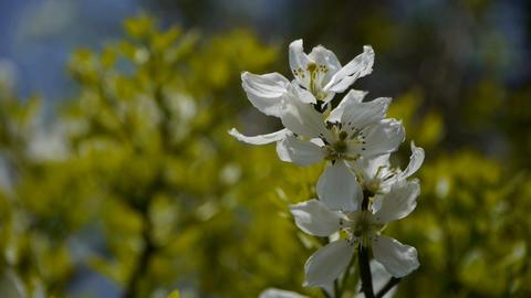 Flowers sway in wind.Bees flying in flowers Stock Video Footage