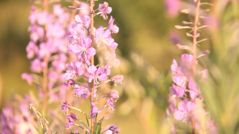 wild flowers and the bees Stock Video Footage