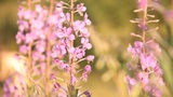 wild flowers and the bees Footage