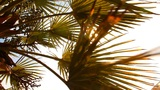 Palm Leaves In The Sun stock footage