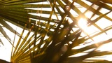 palm leaves in the sun Footage