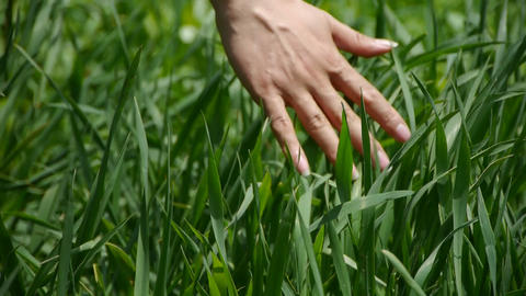 Lush weeds in wind,grassland,Wheat... Stock Video Footage