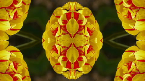 color lotus flower pattern wedding background,gorgeous... Stock Video Footage