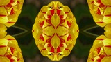 color lotus flower pattern wedding background,gorgeous orient religion fancy,fra Animation