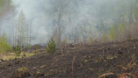 fire in forest Stock Video Footage