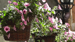 Beautiful Flowers on an old European Street Stock Video Footage